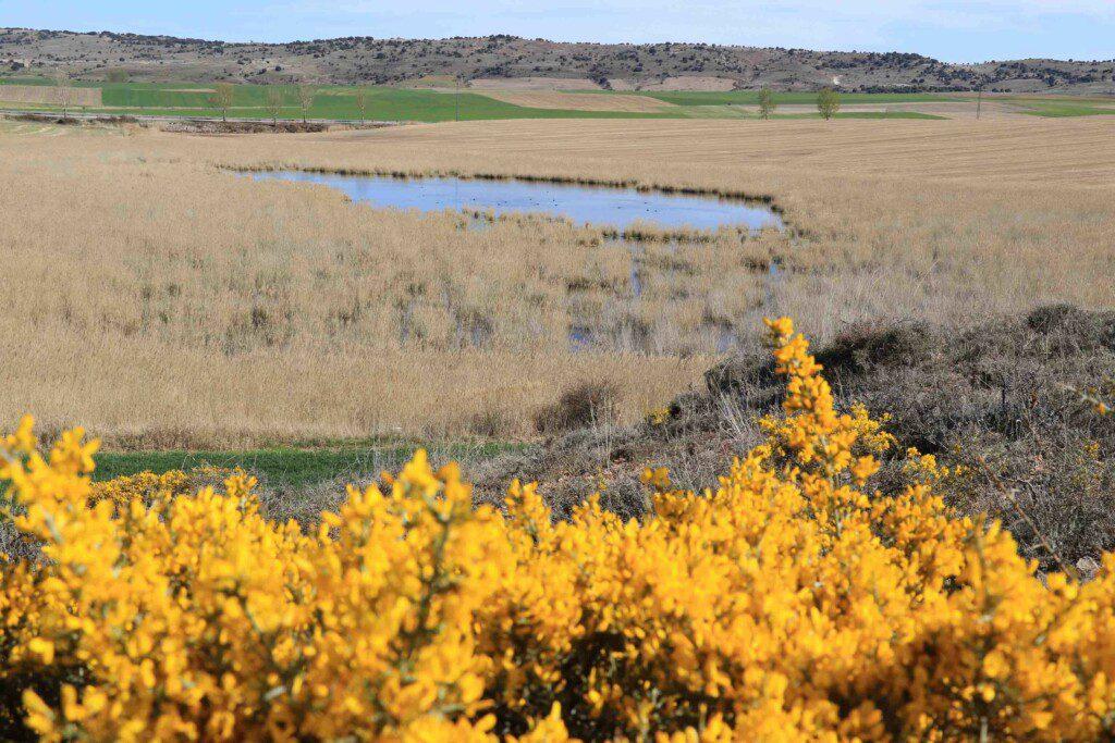 La Laguna de Madrigal en Paredes de Sigüenza